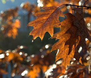 Превью обои листья, макро, коричневый, осень