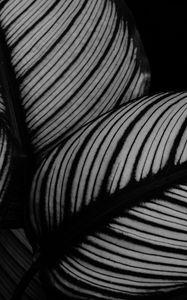 Превью обои листья, растение, полосы, макро, черно-белый