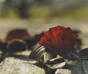Превью обои листья, сухой, осень, дерево, доски, макро