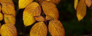 Превью обои листья, ветка, осень, макро