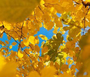 Превью обои листья, желтый, ветки, осень