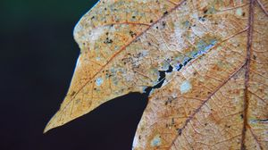 Превью обои листок, сухой, осень, макро