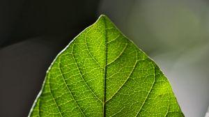 Превью обои листок, зеленый, макро, жилки
