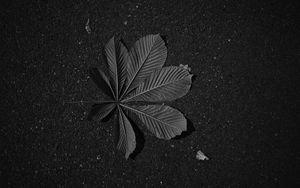 Превью обои листок, жилки, асфальт, макро, черно-белый, черный