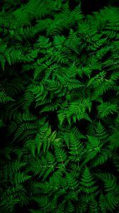 Превью обои листья, растение, зеленый