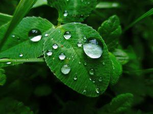 Превью обои листья, трава, роса