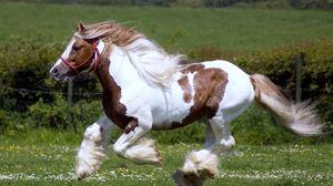 Превью обои лошадь, бег, скачки, трава, грива