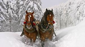 Превью обои лошадь, снег, сани, упряжка, езда