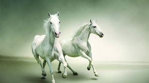 Превью обои лошади, бег, пара