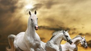 Превью обои лошади, бег, свобода, трава, пыль, небо