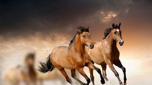 Превью обои лошади, бег, трава, облака