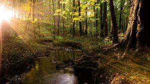 Превью обои лучи, солнце, свет, деревья, лес, переливы