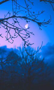Превью обои луна, ветки, деревья, сумерки, фиолетовый, темный