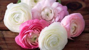 Превью обои лютики, ranunculus, цветы, бутоны, лепестки, белые, розовые
