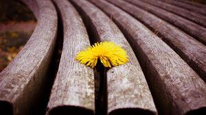 Превью обои макро, доски, одуванчик, жёлтый, цветок