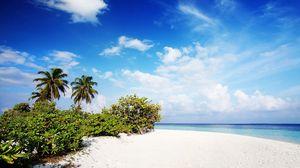 Превью обои мальдивы, песок, пляж, пальмы