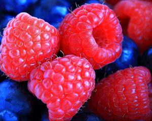 Превью обои малина, брусника, ягода, макро