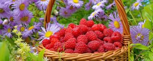 Превью обои малина, корзина, ягоды, цветы
