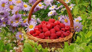 Превью обои малина, ягоды, корзина, цветы