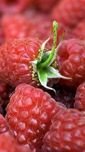 Превью обои малина, ягоды, спелый, листья