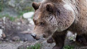 Превью обои медведь, бурый, шерсть, трава