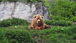 Превью обои медведь, бурый, трава, прикольный, лежать