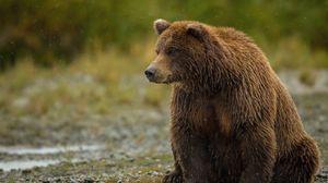 Превью обои медведь, сидит, толстый