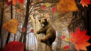 Превью обои медведь, сова, осень, листья, листопад, грибы, лес, деревья