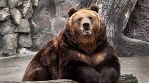 Превью обои медведь, зоопарк, природа, заповедник, морда