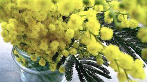 Превью обои мимоза, цветы, букет, ваза