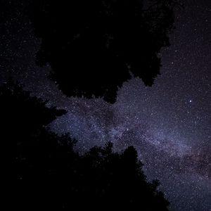 Превью обои млечный путь, звезды, звездное небо, деревья, ночь, темный
