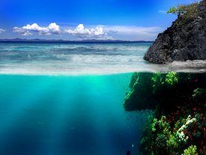 Превью обои море, берег, скалы, подводный мир, растительность, рыба