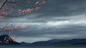 Превью обои море, небо, дерево, пейзаж
