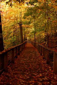 Превью обои мост, лес, листья, осень, пейзаж