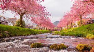 Превью обои мост, река, течение, сакура