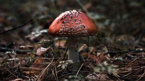 Превью обои мухомор, гриб, макро, осень