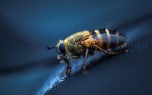 Превью обои муха, насекомое, макро, глаза, крылья