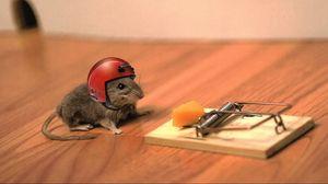 Превью обои мышь, сыр, мышеловка, шлем, прикол, ситуация