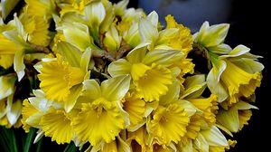 Превью обои нарциссы, цветы, букет, желтые, весна