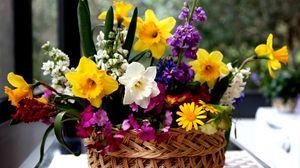 Превью обои нарциссы, цветы, разные, композиция, корзина