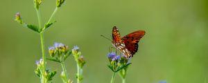 Превью обои насекомое, бабочка, крылья, цветы, макро