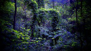 Превью обои ночь, лес, природа