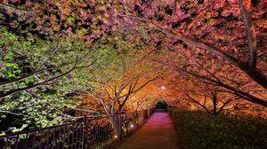 Превью обои ночь, весна, парк, аллея, подсветка