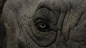 Превью обои носорог, глаз, складки