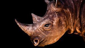 Превью обои носорог, голова, тень, профиль