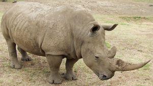Превью обои носорог, грязь, трава