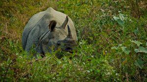 Превью обои носорог, трава, прятаться, рог