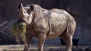 Превью обои носорог, трава, заповедник, большой