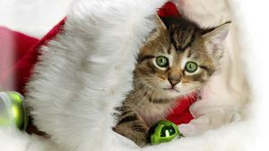 Превью обои новый год, рождество, котенок, шляпа, атрибут