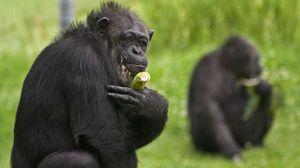 Превью обои обезьяна, банан, трава, сидеть